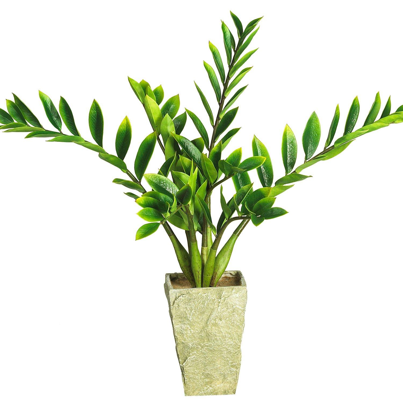 Zamioculcas w/Vase Silk Plant