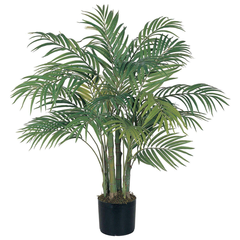 растение пальмовые названия и комнатные фото