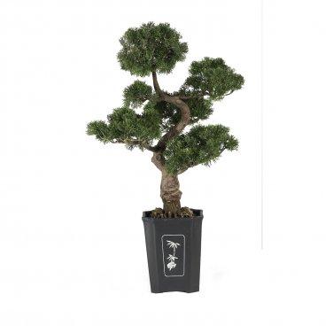 Cedar Bonsai Tree 36 in