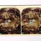 Stereoview Genre Tinted Bird's Egg Nest Twigs Feathers Ornithology Early #37