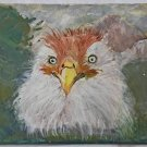 Folk Art Outsider Original Painting Fluffy White Close Up Chicken Face Rinahi