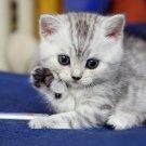 Cute Kitten Beautiful Cat Kitty 16x12 Print Poster
