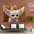 Fennec Fox Baby Small Cute Animal Huge Giant Print Poster