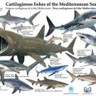 Sharks Marine Biology Educational Science 16x12 Print Poster