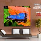 Beautiful Blue Butterfly Macro Nature GIANT 63x47 Print Poster