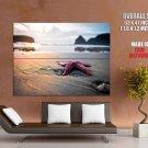 Starfish Beach Sea Shore Macro Huge Giant Print Poster