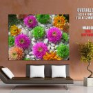 Beautiful Flowers Nature HUGE GIANT Print Poster