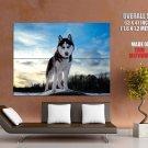 Husky Dog Animal Snow Nature Huge Giant Print Poster