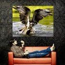 Bird Of Prey Fish Water Nature Animals Huge 47x35 Print POSTER