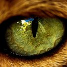 Cat S Eye Macro Close Animal Pupil Huge 47x35 Print Poster