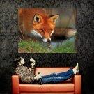 Hunting Fox Cunning Animal Huge 47x35 Print Poster