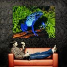 Blue Frog Wild Nature Animal Huge 47x35 Print Poster