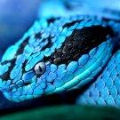 Blue Snake Macro Nature Animals 32x24 Print POSTER