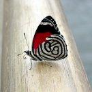 Beautiful Butterfly Macro Animal 32x24 Print Poster