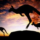 Kangaroo Sunset Wild Animal Nature 16x12 Print Poster