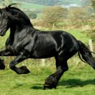 KNIGHT Black Horse Steed Animal 16x12 Print Poster
