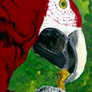 OSWOA Red Macaw