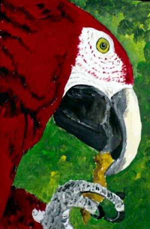 OSWOA Red Macaw