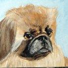 ACEO Pekingese Dog