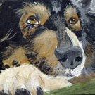 ACEO Sleepy Australian Shepherd