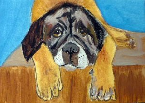 ACEO Sad English Mastiff