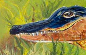 ACEO Gator