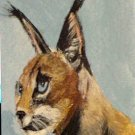 ACEO Caracal Cat