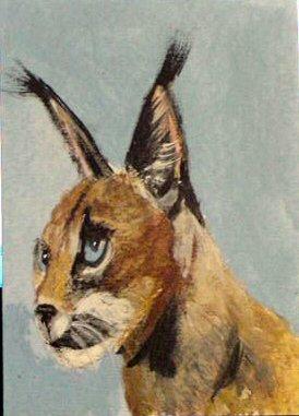 ACEO Caracal Cat