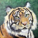 How to Paint a Tiger with pattern