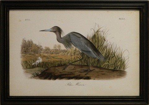 Audubon Blue Heron