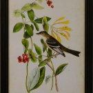 Audubon Least Flycatcher