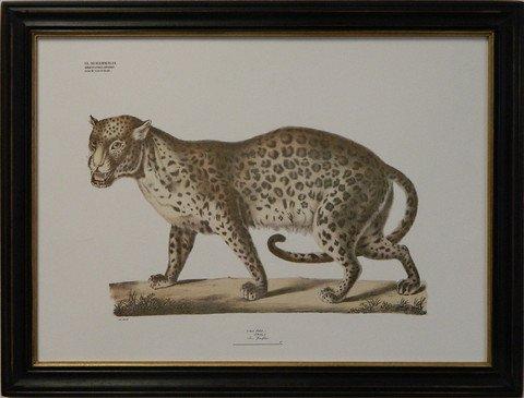 August Goldfuss Leopard