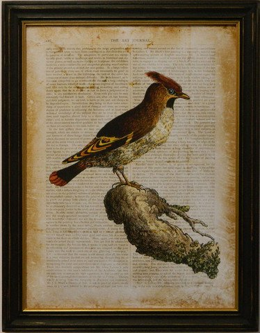 Antiquarian Bird III