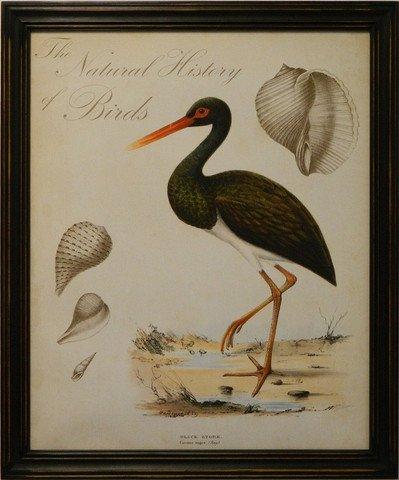 Natural History of Birds II