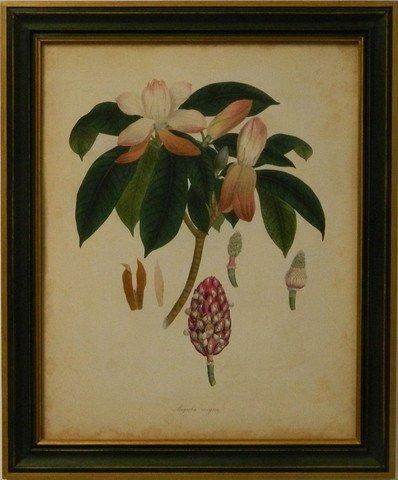 Engelmann Botanical I