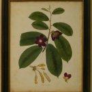 Engelmann Botanical IV
