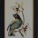 Exotic Bird III