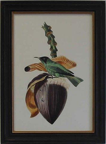 Exotic Bird VIII
