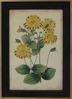 Curtis Blooms Yellow I - Black Frame