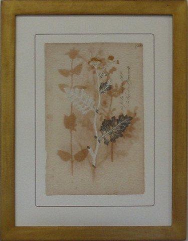 Pressed Botanical 68