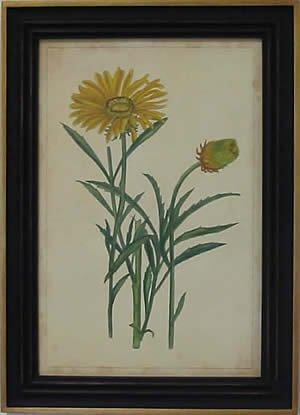 Curtis Blooms Yellow III - Black Frame