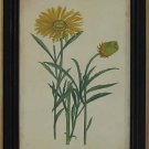 Curtis Blooms Yellow III - Black Frame