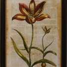Antiquarian Tulip I