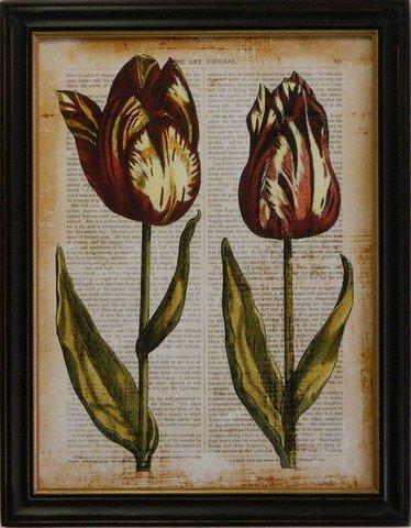 Antiquarian Tulip III