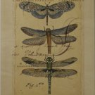 Dragonfly Ephemera I