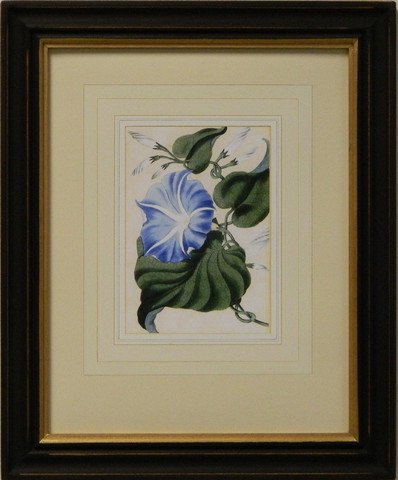 Vintage English Botanical Study Blue I