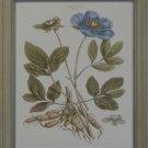 Bashful Blue Floral I