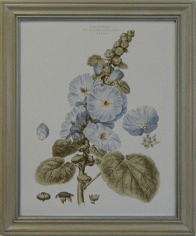 Bashful Blue Floral IV