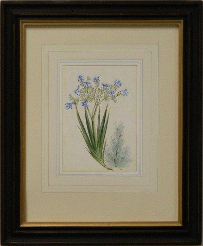 Vintage English Botanical Study Blue IV