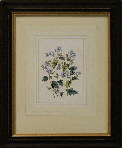 Vintage English Botanical Study Blue V